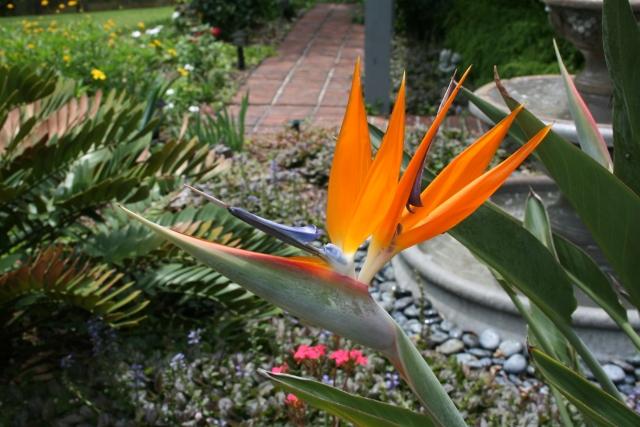 Cynthia's garden