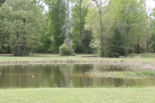 the pond in the back