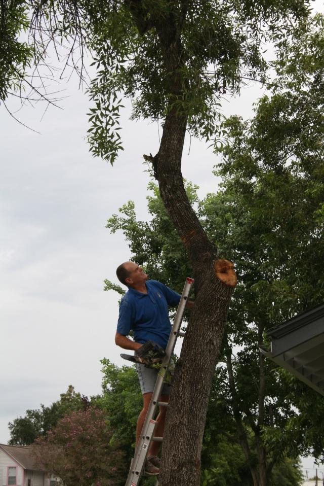 my lumberjack
