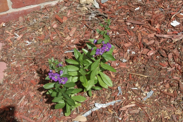 our sweet little purple flowers.  does anyone know what this is?