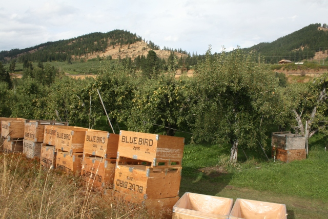 another view of the orchards