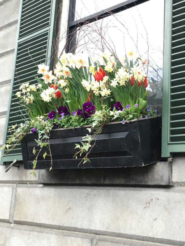 flowers on Beacon