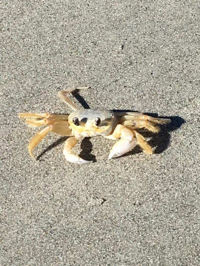 Mr Crab!